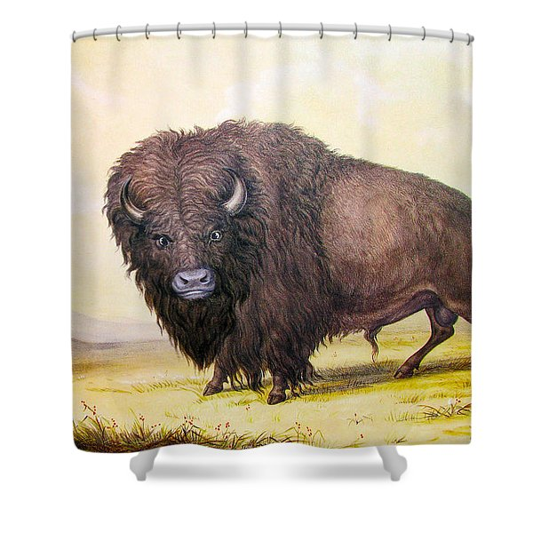 Bull Buffalo Shower Curtain by George Catlin