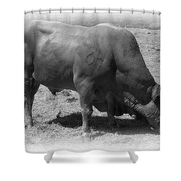 BULL NUMBER 07 Shower Curtain by Daniel Hagerman