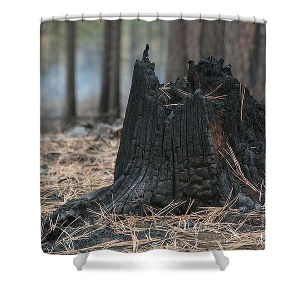 Burnt Tree Trunk Shower Curtain by Juli Scalzi