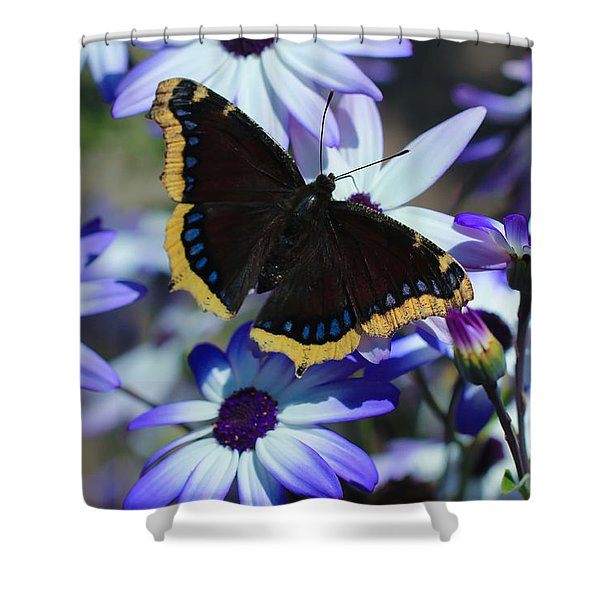 Butterfly In Blue Shower Curtain by Heidi Smith
