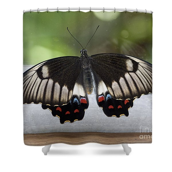 Butterfly Shower Curtain by Steven Ralser
