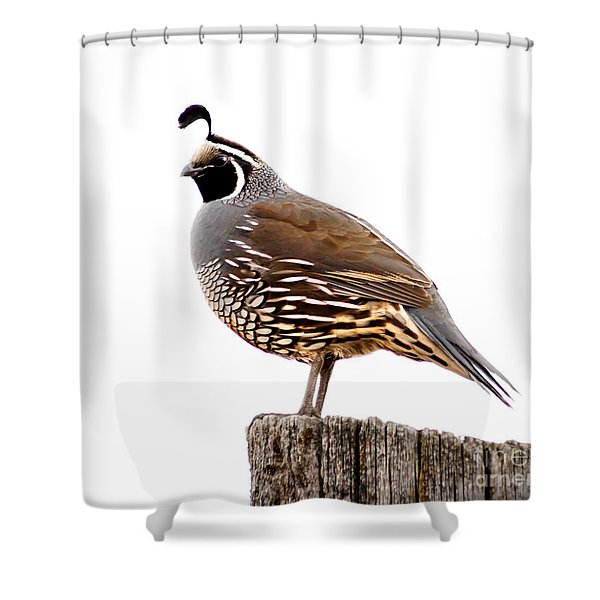 California Quail Shower Curtain by Robert Bales