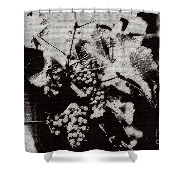 California Vineyard Shower Curtain by Linda Knorr Shafer