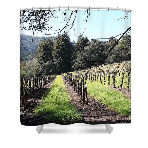 California Vineyards In Late Winter Just Before The Bloom 5D22053 Shower Curtain by Wingsdomain Art and Photography