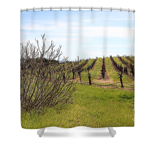 California Vineyards In Late Winter Just Before The Bloom 5D22121 Shower Curtain by Wingsdomain Art and Photography