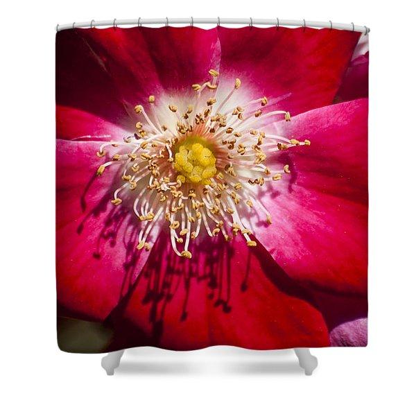 Camellia Shower Curtain by Carolyn Marshall