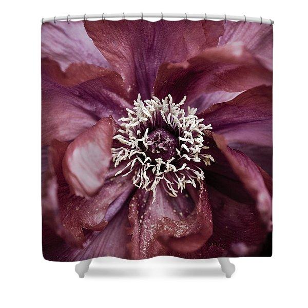 Shower Curtains - Camellia Shower Curtain by Frank Tschakert