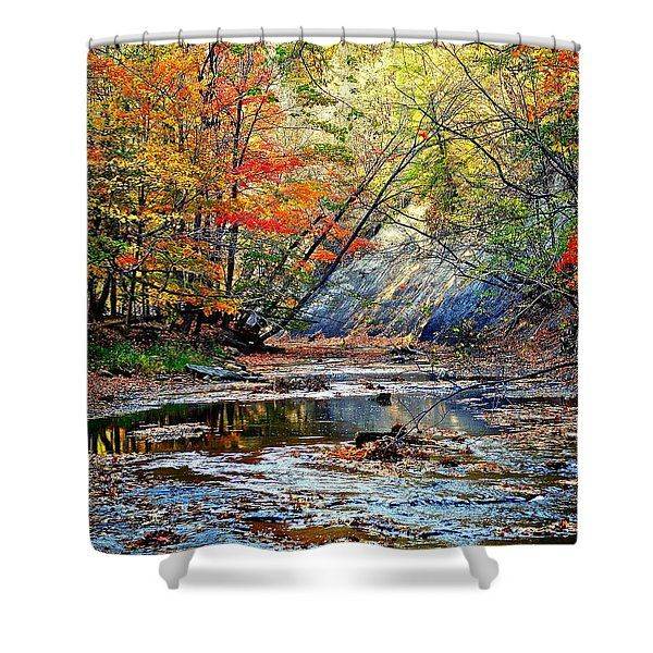 Canopy of Color IV Shower Curtain by Frozen in Time Fine Art Photography