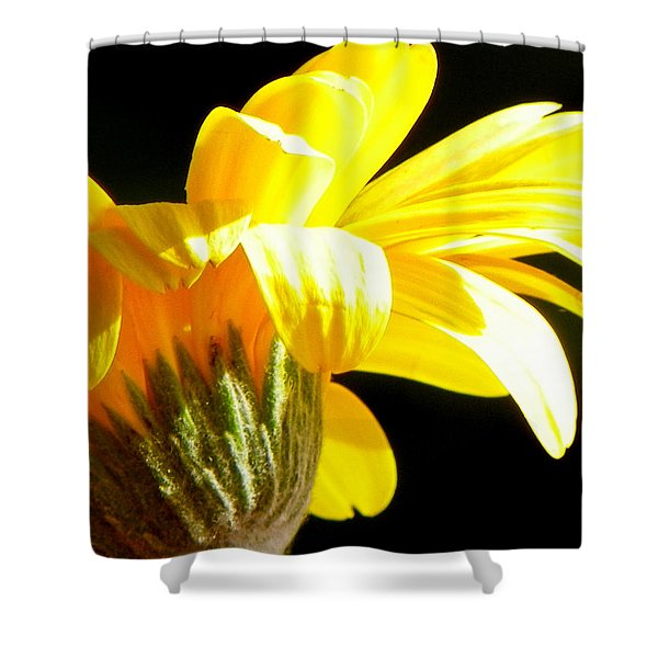 Canopy of Petals Shower Curtain by KAREN WILES