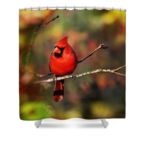 Cardinal Territory Shower Curtain by Christina Rollo