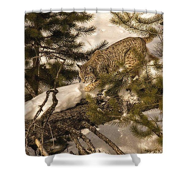 Cat Walk Shower Curtain by Priscilla Burgers
