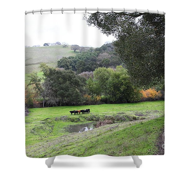 Cattles at Fernandez Ranch California - 5D21066 Shower Curtain by Wingsdomain Art and Photography