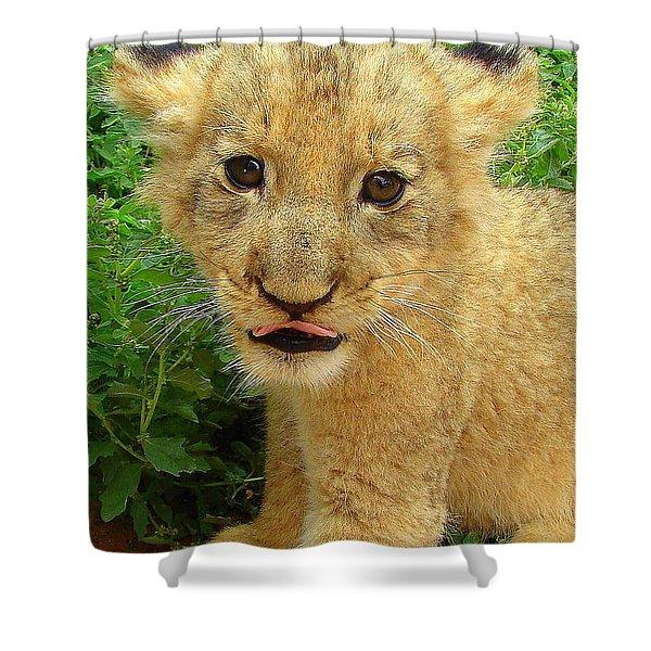 Cheeky Cub Shower Curtain by Ramona Johnston