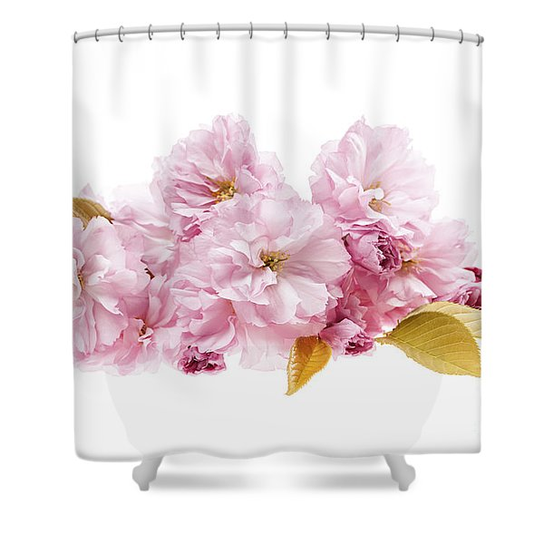 Cherry Blossoms Arrangement Shower Curtain by Elena Elisseeva