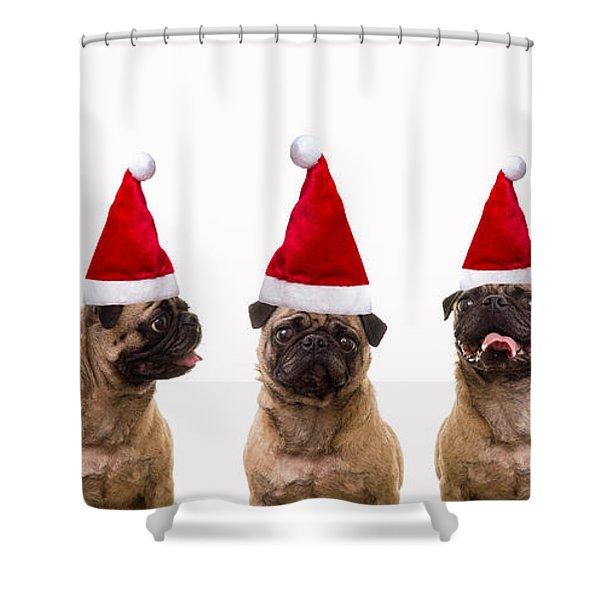 Christmas Caroling Dogs Shower Curtain by Edward Fielding