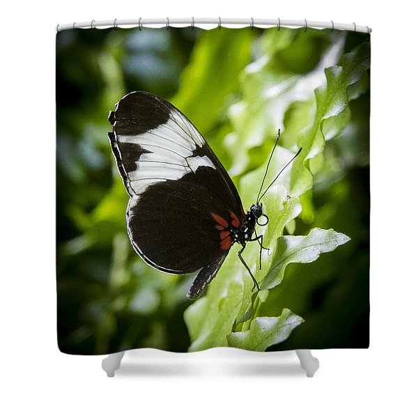 Circle Shower Curtain by Jean Noren