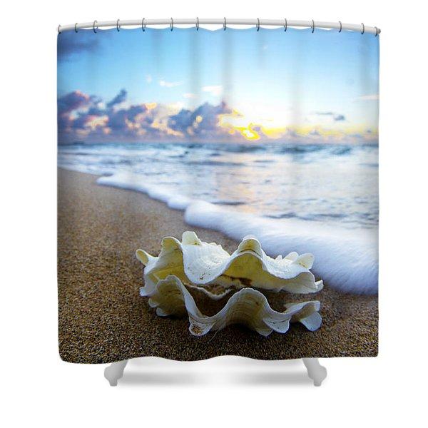 Clam Foam Shower Curtain by Sean Davey