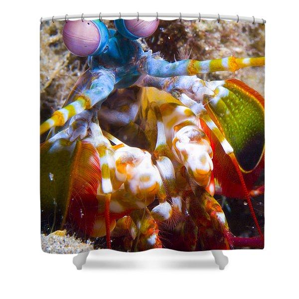 Close-up View Of A Mantis Shrimp Shower Curtain by Steve Jones