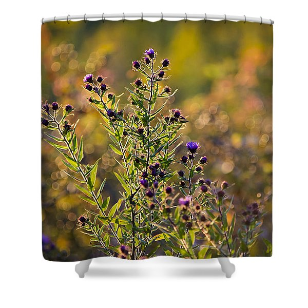 Colorful Bouquet Of Purple Aster Flowers Shower Curtain by Christina Rollo