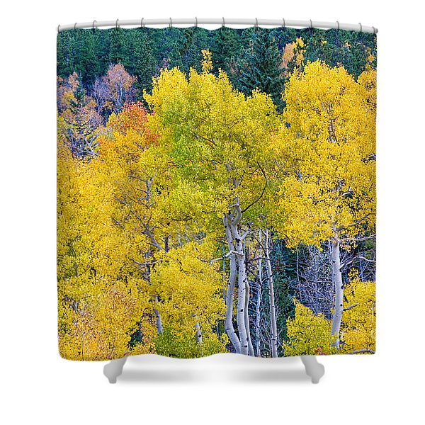Colorful Forest Shower Curtain by James BO  Insogna