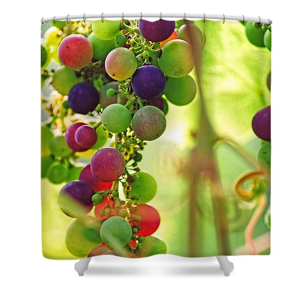 Colorful Grapes Shower Curtain by Peggy Collins