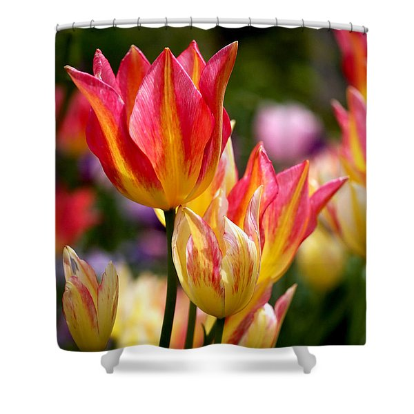 Colorful Tulips Shower Curtain by Rona Black