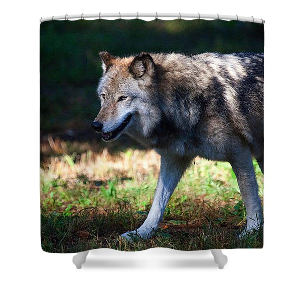 Colorful Wolf Shower Curtain by Karol  Livote
