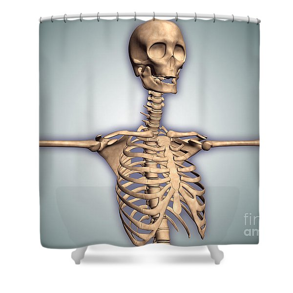 Conceptual Image Of Human Rib Cage Shower Curtain by Stocktrek Images