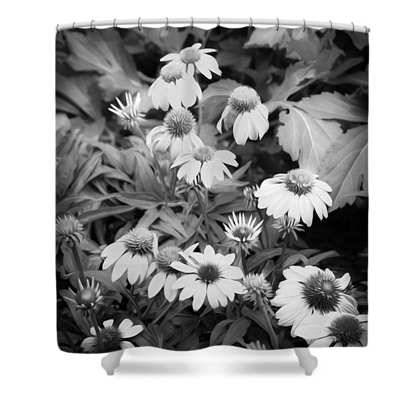 Coneflowers Echinacea Rudbeckia Bw Shower Curtain by Rich Franco