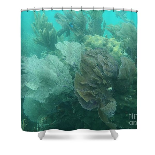 Coral Fans Shower Curtain by Adam Jewell