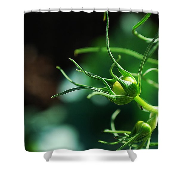#cosmos Shower Curtain by Becky Furgason