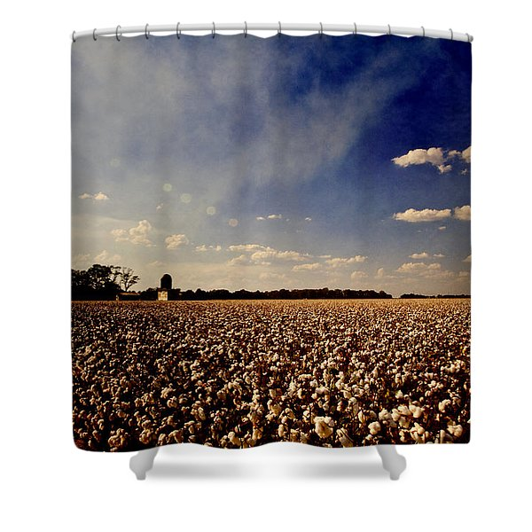 Cotton Field Shower Curtain by Scott Pellegrin