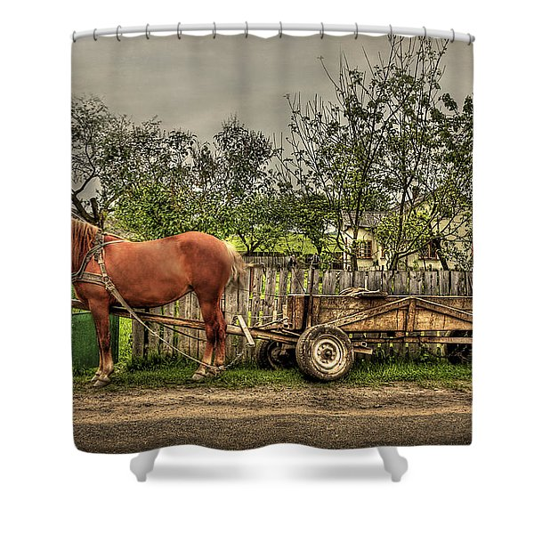 Country Life Shower Curtain by Evelina Kremsdorf