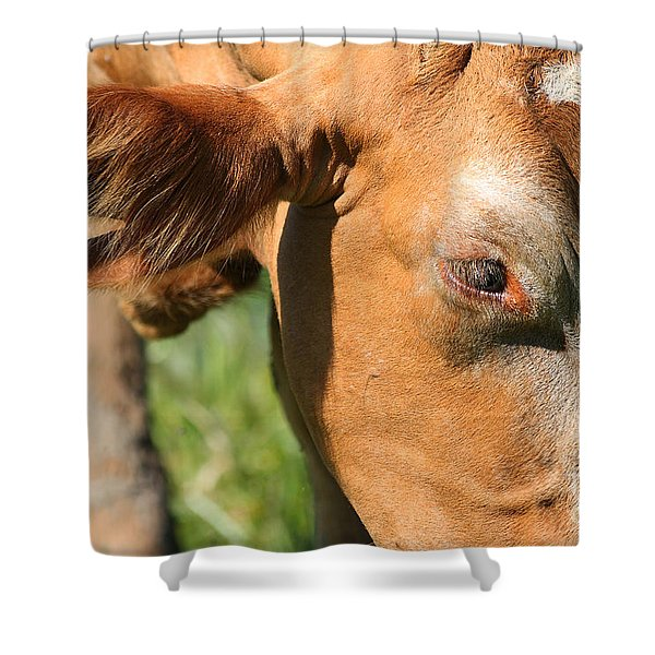 Cow Closeup 7D22391 Shower Curtain by Wingsdomain Art and Photography