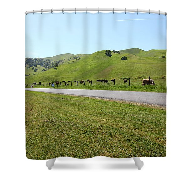 Cows Along The Rolling Hills Landscape of The Black Diamond Mines in Antioch California 5D22326 Shower Curtain by Wingsdomain Art and Photography