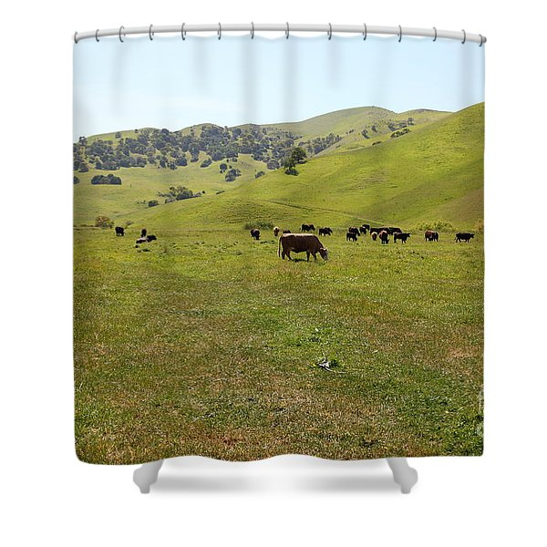 Cows Along The Rolling Hills Landscape of The Black Diamond Mines in Antioch California 5D22327 Shower Curtain by Wingsdomain Art and Photography