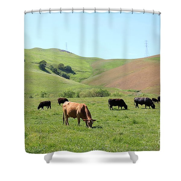 Cows Along The Rolling Hills Landscape of The Black Diamond Mines in Antioch California 5D22355 Shower Curtain by Wingsdomain Art and Photography