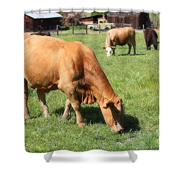 Cows Home On The Ranch At The Black Diamond Mines in Antioch California 5D22358 Shower Curtain by Wingsdomain Art and Photography