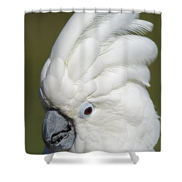 Crazy As Crackers... Shower Curtain by Nina Stavlund