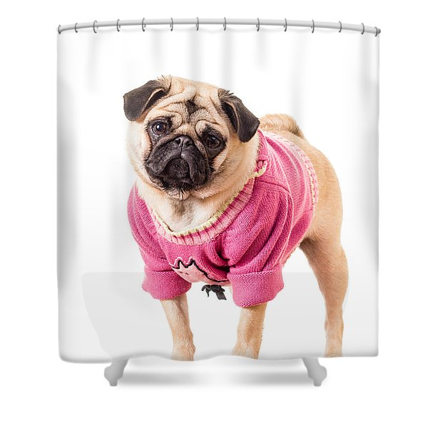 Cute Pug wearing sweater Shower Curtain by Edward Fielding