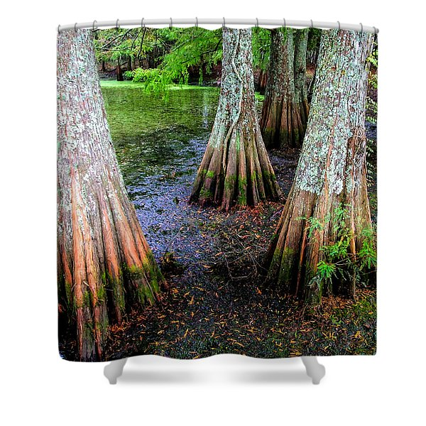 CYPRESS WALTZ Shower Curtain by KAREN WILES