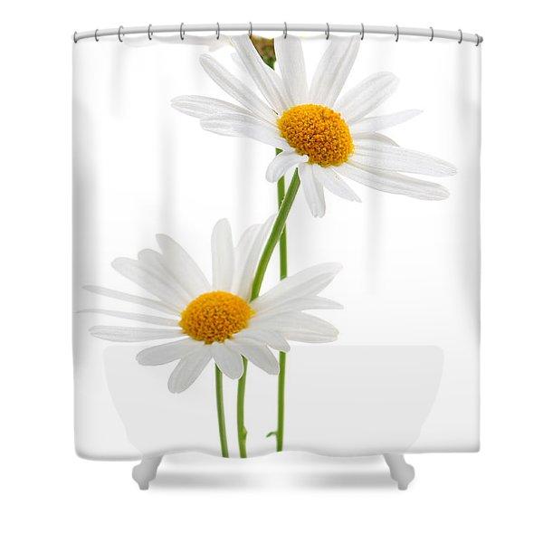 Daisies On White Background Shower Curtain by Elena Elisseeva