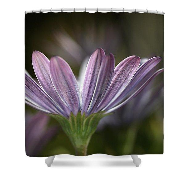Daisy Delight Shower Curtain by Joy Watson
