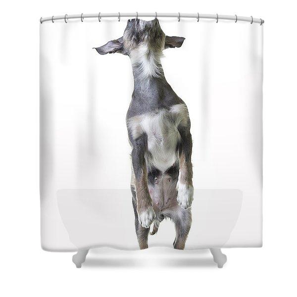 Dancing Dog Shower Curtain by Edward Fielding