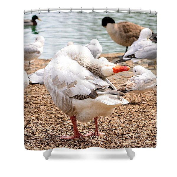 Dancing Goose 2 Shower Curtain by Bob Gross