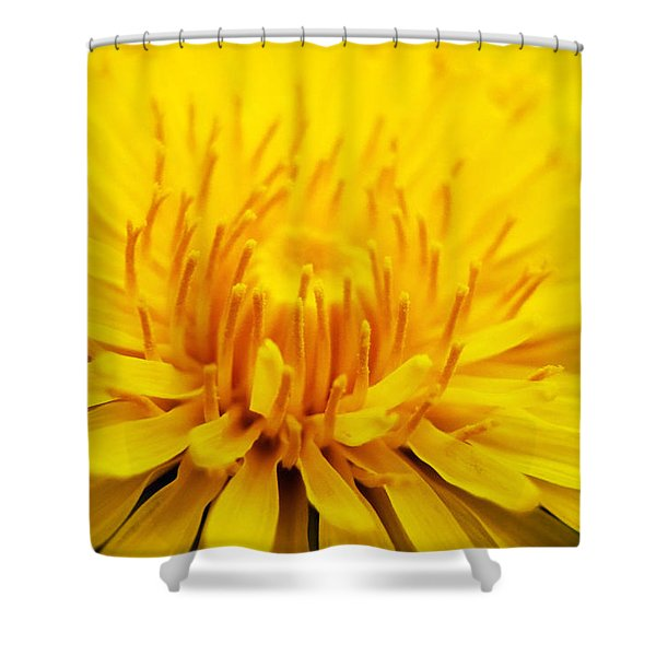Dandelion Shower Curtain by Christina Rollo