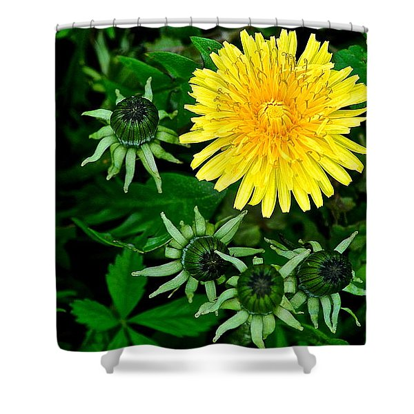 Dandelion Farm Shower Curtain by Frozen in Time Fine Art Photography