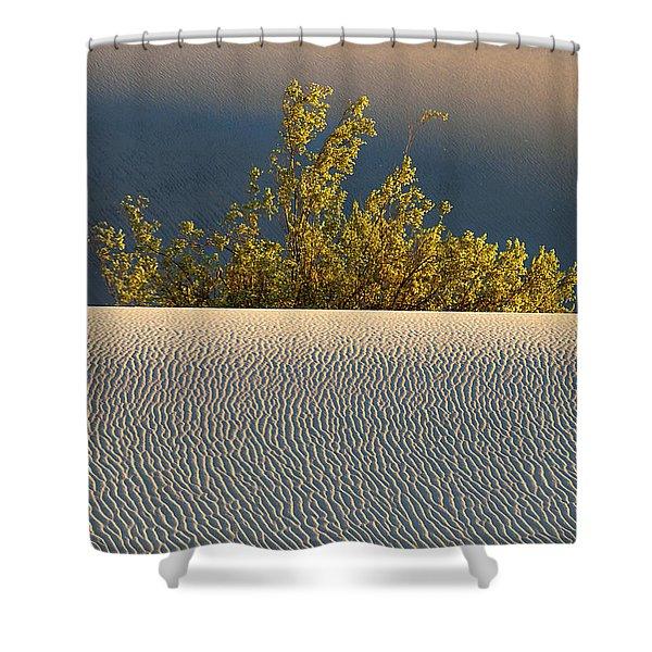 Dawn Mesquite Shower Curtain by Joe Schofield
