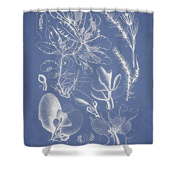 Delesseria Middendorfii Shower Curtain by Aged Pixel