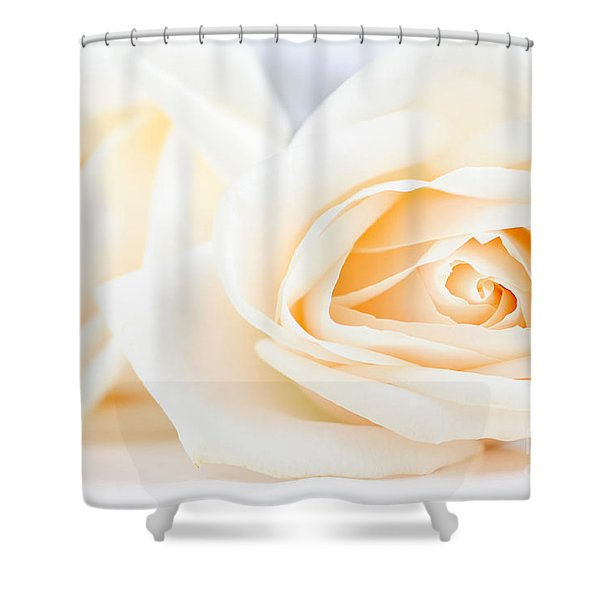 Delicate beige roses Shower Curtain by Elena Elisseeva